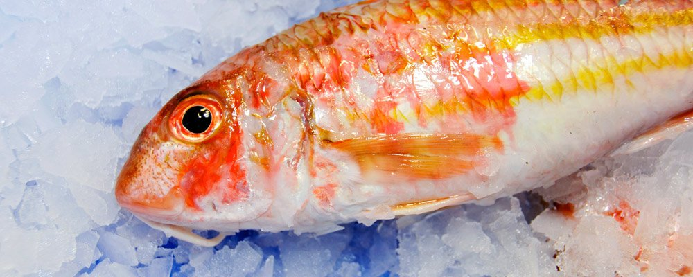 New wave seafood fresh fish company seasonal for Fresh fish company