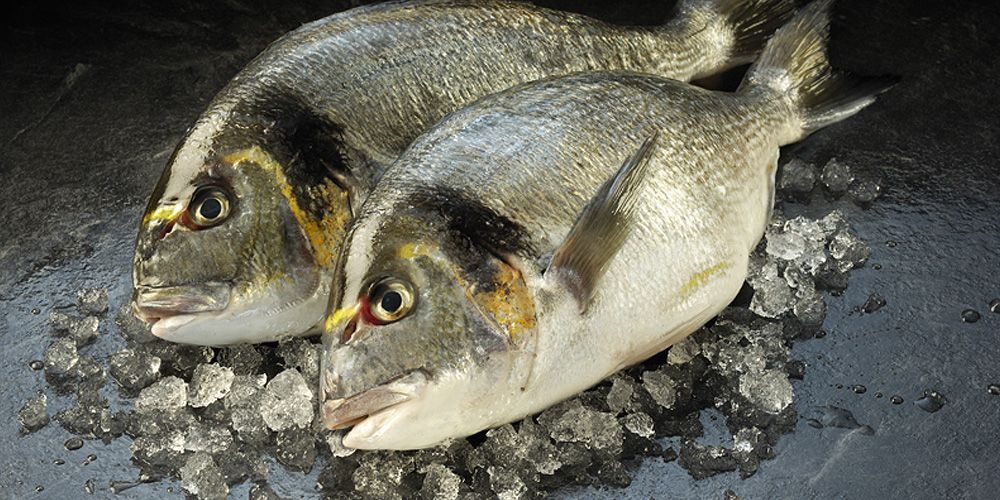 New wave seafood fresh seafood company fresh fish for Fresh fish online